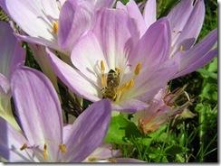3,9,2011 včelí hoblování 392