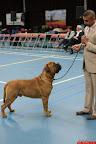 20130511-BMCN-Bullmastiff-Championship-Clubmatch-2041.jpg