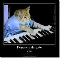 gato pianista blogdeimagenes (27)