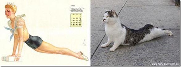 cats-pinup-models-17