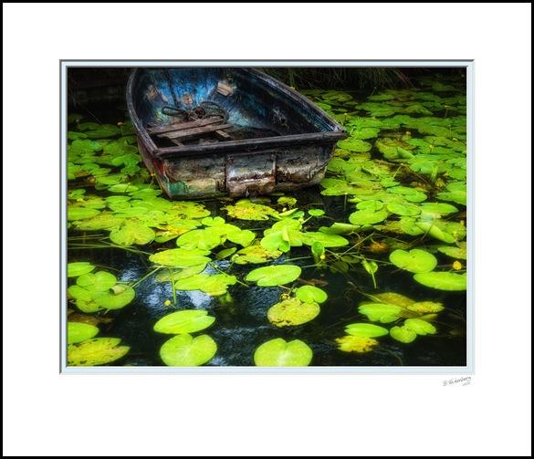 P1060239A-Lillies-21x18inch-Print