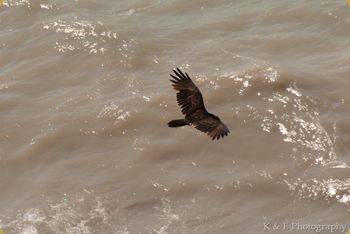 hawkcliff_Ken-11