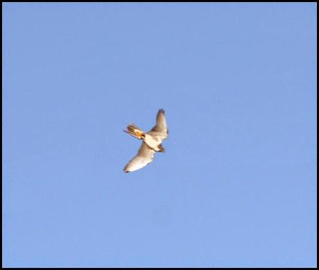 05g - Flight Demo - Hybrid Falcon 2