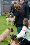 20100513-Bullmastiff-Clubmatch_30846.jpg