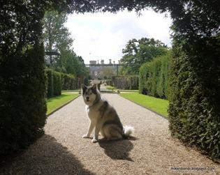 Munson - stately hound