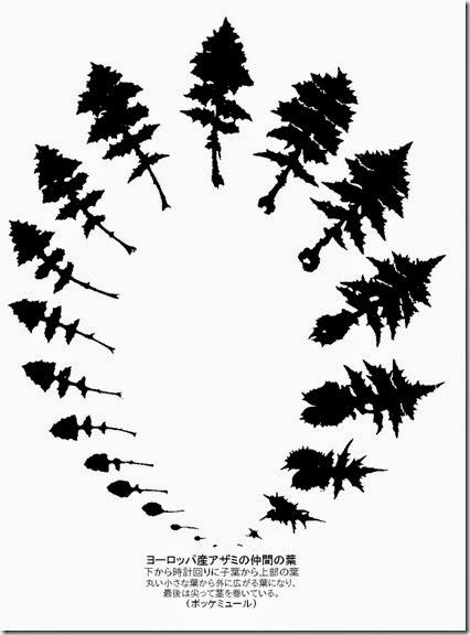 葉のメタモルフォーゼ