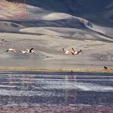 Arica - Parque Nacional Lauca  (47 de 48).jpg