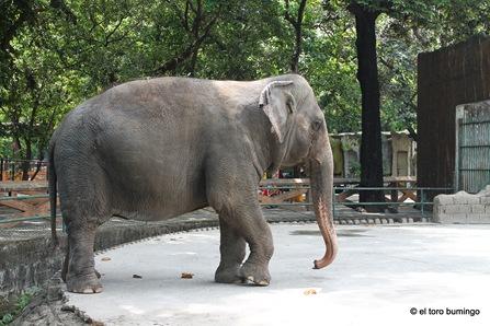 manila zoo 34