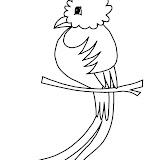 quetzal.jpg