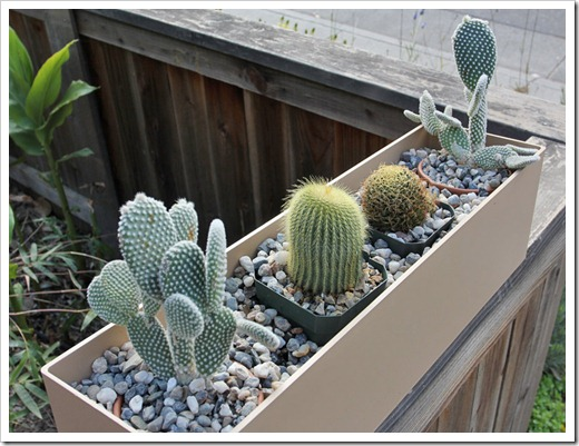 110411_cactus_box2a