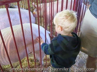 pigs at farm show