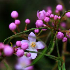 Spring_12.jpg