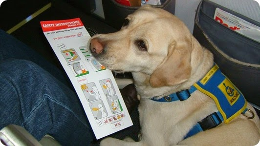 safety pet