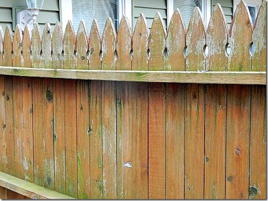 Wordless Wed backyard fence