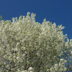 Trees-in-CT-in-Spring-2.JPG