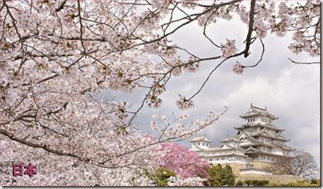 vinyl-magnet-japan-sakura-himeji-castle