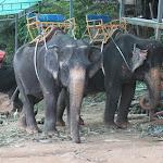 Tailand-Phuket (18).jpg