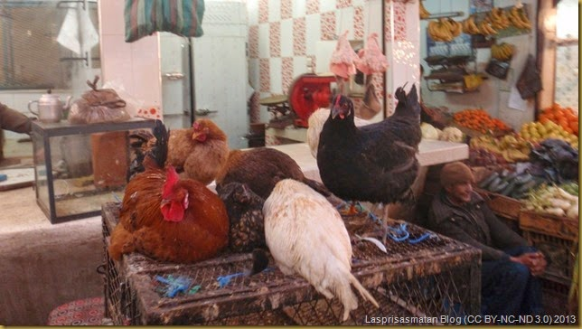 Pollos y gallinas de campo. Carne más fresca, imposible