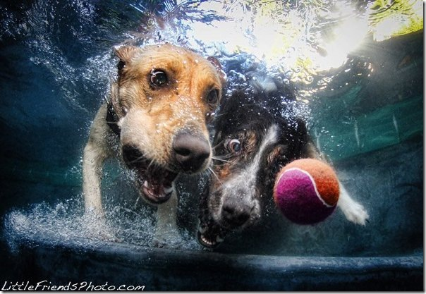 Seth-Casteels-Underwater-Dog-Photography-10