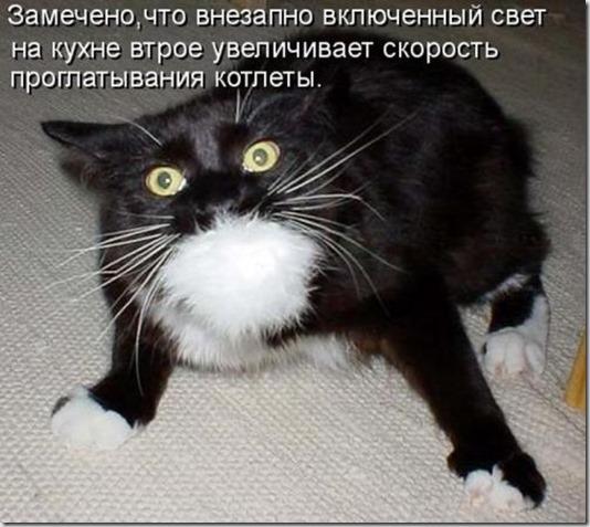 1354868384_kotomoto-32