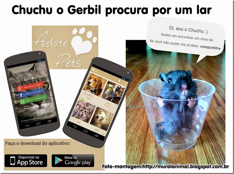 chuchu_adote-pets