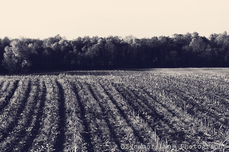 spring field-SycamoreLane Photography