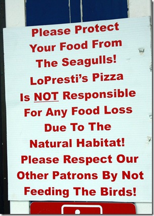 pizza-eating-seagulls