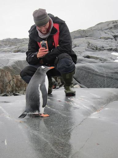 Erik videotaping a curious Gentoo Penguin.