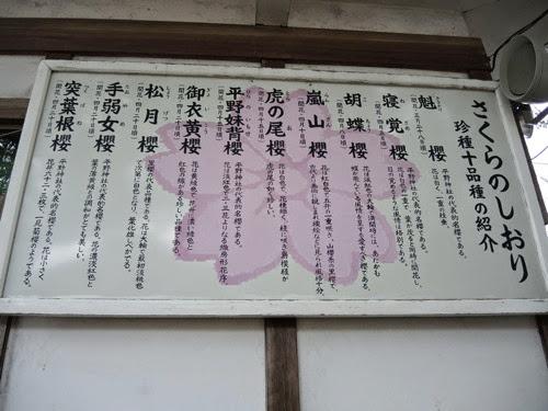 平野神社さくらのしおり