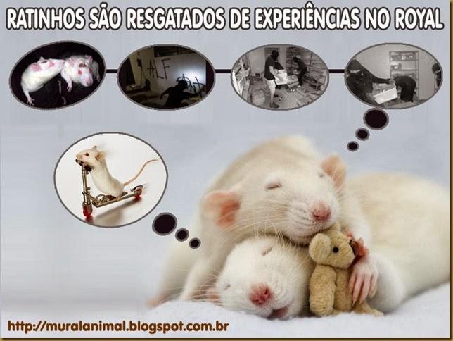 ratinhos-royal