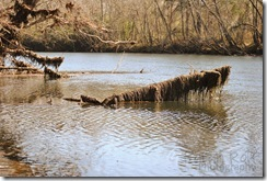 log-in-river