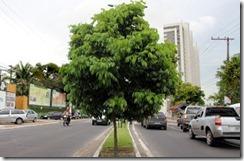 Manaus_plano de arborização
