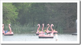 Florida vacation Epcot flamingo paddle boats