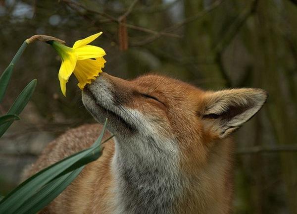 Appreciating Nature