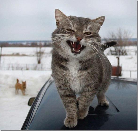cute-funny-animals-4