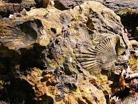 fossili.jpeg