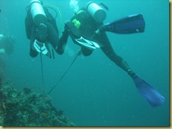 Reef Hooking