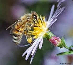 Amazing Pictures of Animals, Photo, Nature, Incredibel, Funny, Zoo, Bee, Insetcs, Anthophila, Alex (12)