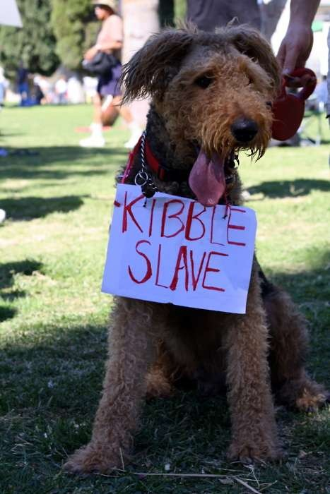 cute-pets-at-occupy-wall-street-05