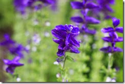 nybg-new-york-botanic-gardens-bronx-006
