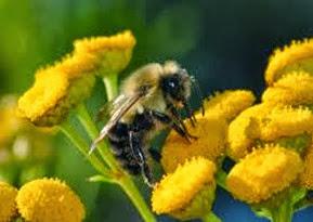Amazing Pictures of Animals, Photo, Nature, Incredibel, Funny, Zoo, Bee, Insetcs, Anthophila, Alex (13)