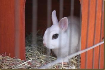Årnes Zoo had some bunnies
