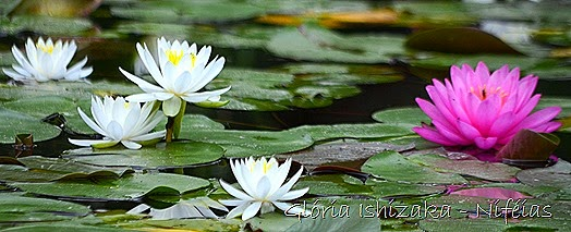 Glória Ishizaka - flores 81