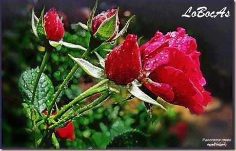 rosaroja-LoBocAs-05