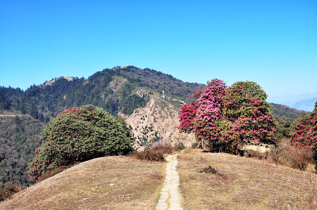 Trekking in Nepal:. Poon Hill Trek