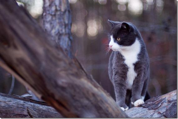 cat12-174