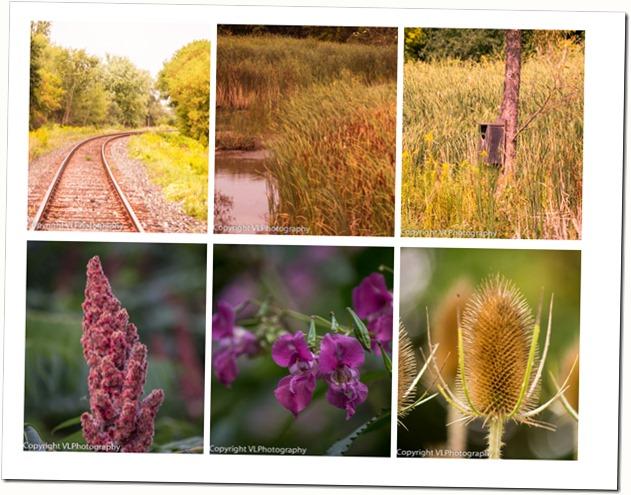 Mabel Davis Trail collage
