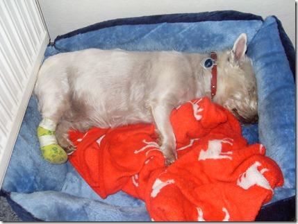 2011_07 Max ist krank (2)
