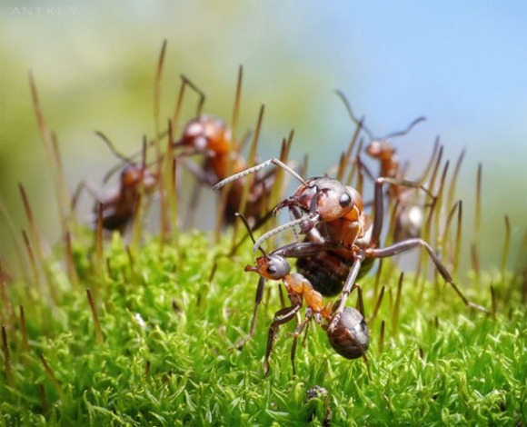 Life-of-Ants-Andrey-Pavlov-18