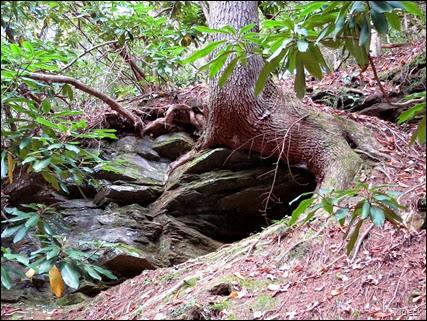 Raven Creek Trail